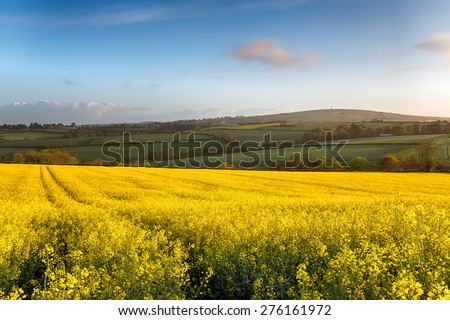 Spring fields of yellow rapeseed in bloom at Callington in Cornwall with Kit Hill in the background - stock photo
