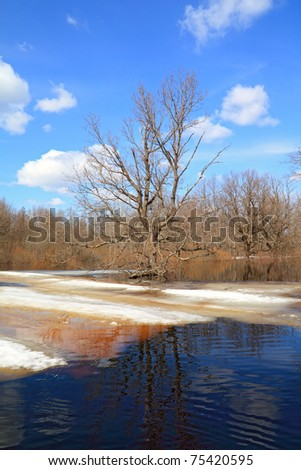 spring flood in wood - stock photo