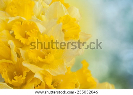 Spring floral border,  narcissus flowers - stock photo