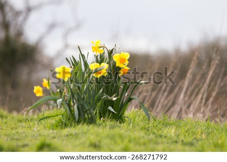 Spring Flower - stock photo