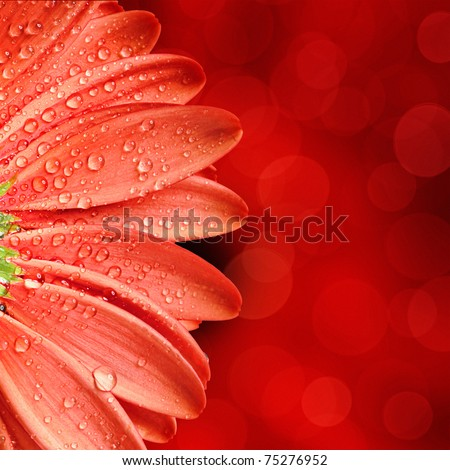 spring flower background - stock photo