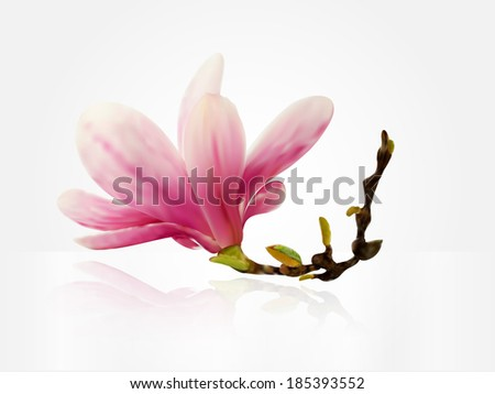 Spring flower background or card Magnolia illustration
