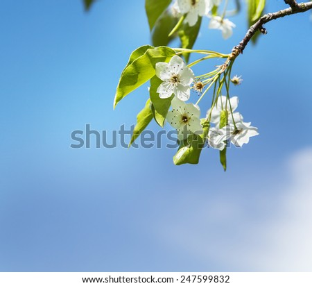 Spring Flower background with apple tree bloom, Beautiful pink flowers made with color filters, spring bloom, spring background - stock photo