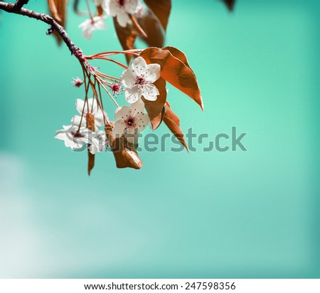 Spring Flower background with cherry tree bloom, Beautiful pink flowers made with color filters, spring bloom, spring background - stock photo