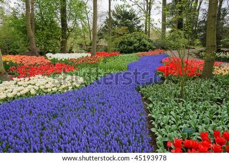 Spring flower bed in Keukenhof gardens, the Netherlands - stock photo