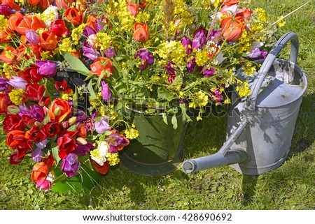 spring flower bouquet with tulips in garden with wateringcan