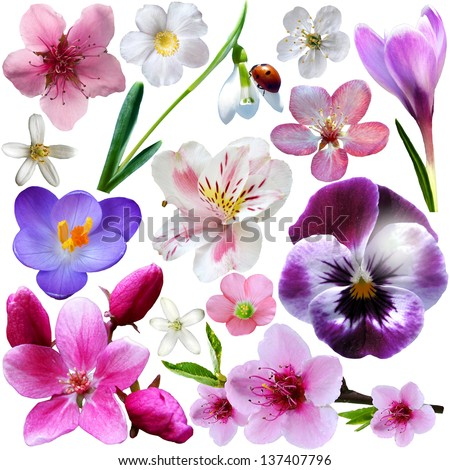 Spring flower collection isolated on white background - stock photo