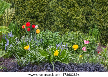 Spring Flower Garden with tulips, bluebells, and daffodils set against a green background of cedar trees. - stock photo