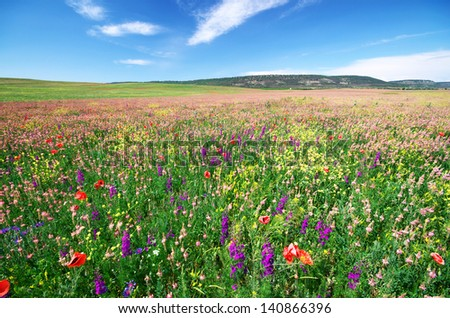 Spring flower meadow. Composition of nature. - stock photo