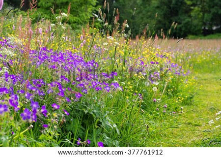 spring flower meadows in mountains in many colours - stock photo