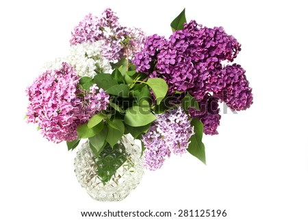 Spring flower, twig purple lilac - stock photo