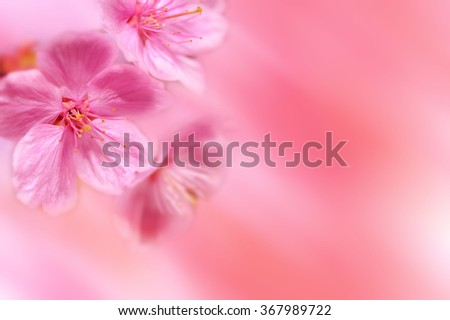Spring flower with pink background