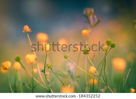 Spring flowering meadow flowers-yellow flowers - stock photo