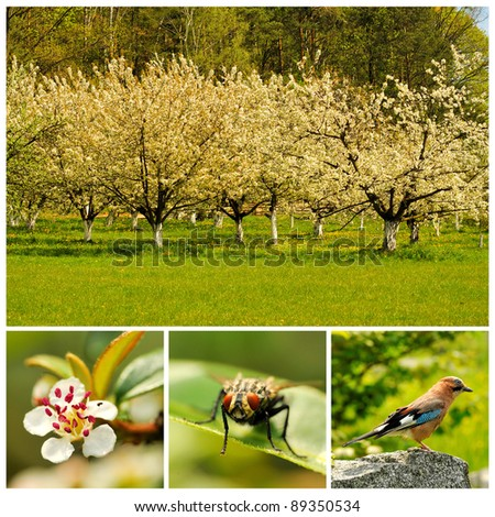 Spring. Flowering trees. Collage with trees, flower, bird and fly - stock photo