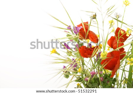 Spring flowers. - stock photo