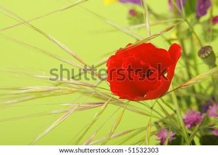 Spring flowers. - stock photo