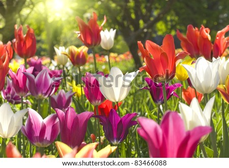 Spring flowers - stock photo