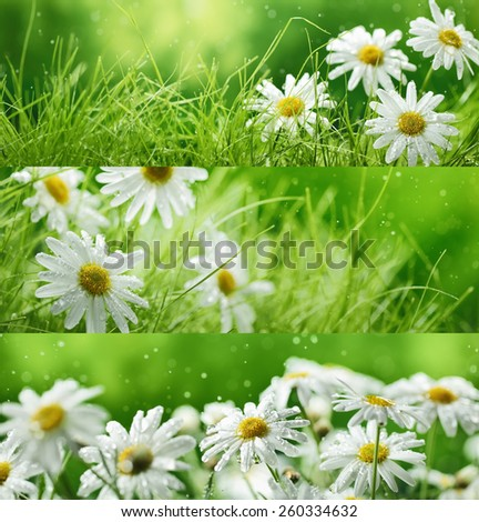 Spring flowers and grass,Natural banners. - stock photo