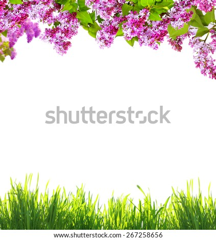 Spring flowers  and green grass on white background - stock photo
