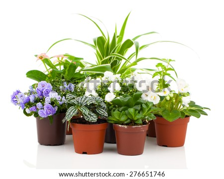 spring flowers and plants, isolated on white background - stock photo