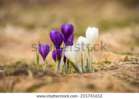 Spring flowers as a background - stock photo