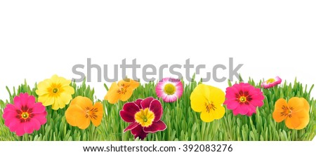Spring flowers background. Daisy in grass. Nature border.  Easter card with copy space.