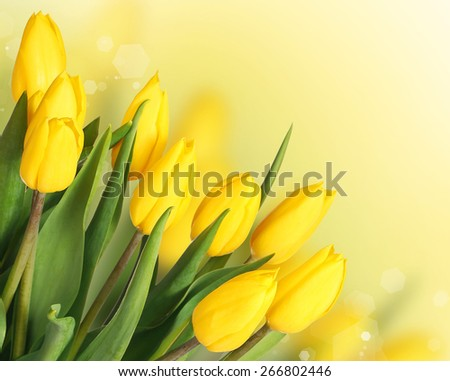 Spring Flowers. Beautiful Yellow Tulips Bouquet - stock photo