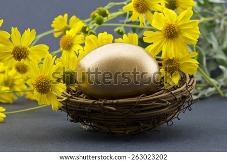 Spring flowers behind gold nest egg suggests recovery, success, and financial strategies. Yellow daisy-like flowers are desert brittle bush, Encelia farinosa.   Horizontal image with gray background. - stock photo