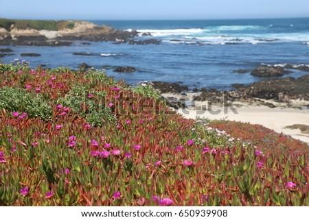 Spring flowers by beach california carmel stock photo royalty free spring flowers by the beach in california carmel area pacific ocean mightylinksfo