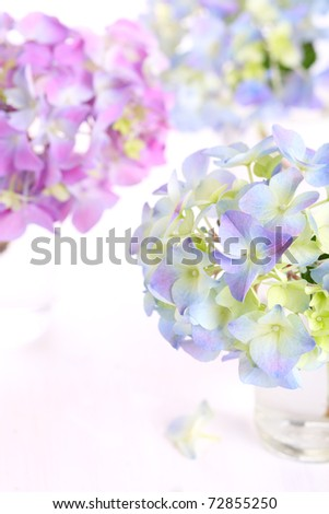 Spring flowers hydrangea - stock photo