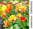 Spring flowers in a meadow with tulips in foreground. - stock photo