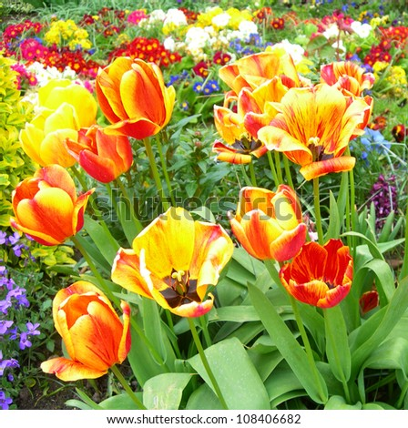 Spring flowers in a meadow with tulips in foreground.