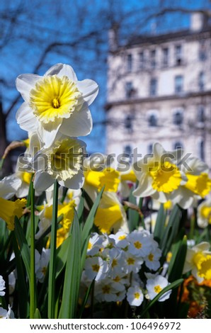 Spring flowers central london england stock photo royalty free spring flowers in central london england mightylinksfo