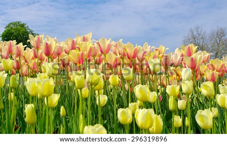 Spring flowers in different colors