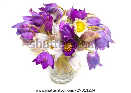 Spring flowers in glass of water isolated