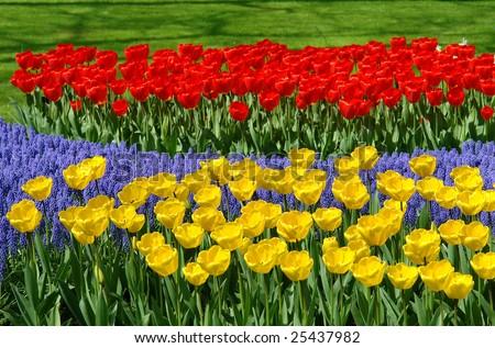 Spring flowers in Keukenhof gardens, the Netherlands - stock photo