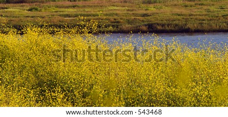 Spring Flowers in the Foreground of the Bay - stock photo