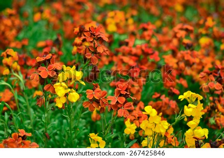 Spring flowers in the park in Crimea - stock photo