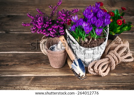 Spring flowers in wicker basket with garden tools - stock photo