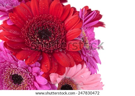 Spring flowers isolated over white - stock photo