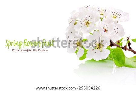 Spring flowers of fruit trees isolated on white background - stock photo