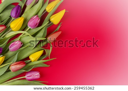 spring flowers on red background - stock photo