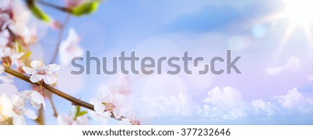 spring flowers on the blue sky background - stock photo