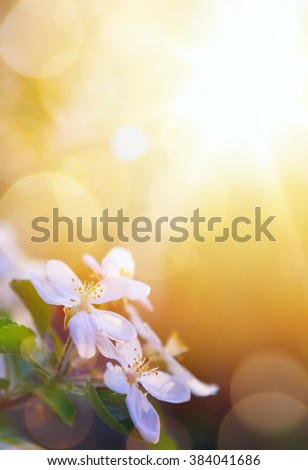 spring flowers on the sky background - stock photo