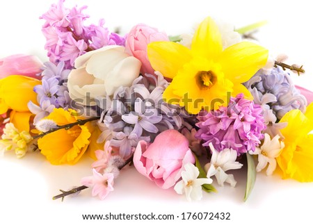 spring flowers on the white background - stock photo