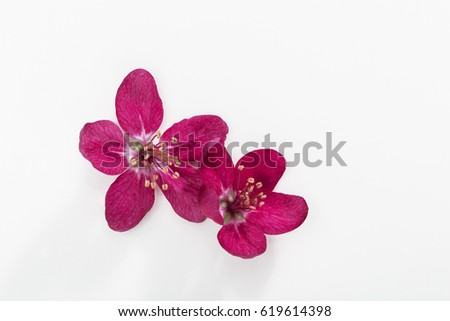 Spring flowers on white background perfume stock photo royalty free spring flowers on white background perfume fragrance therapy mightylinksfo