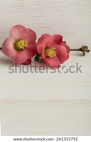 spring flowers on wooden table - stock photo