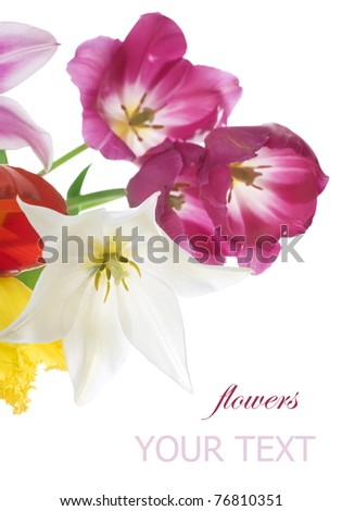Spring Flowers over white. Tulips bunch