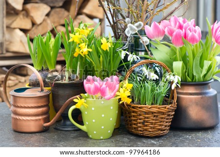 spring flowers. tulips, snowdrops and narcissus blooms. selective focus - stock photo