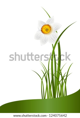 Spring Flowers. White narcissus and green grass on white background with space for your text. Raster illustration. Vector file included in portfolio - stock photo